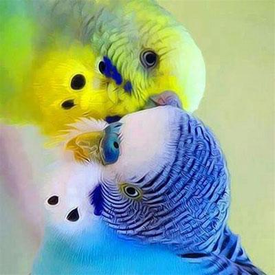 پخش صدای مرغ عشق دانلود آواز مرغ عشق