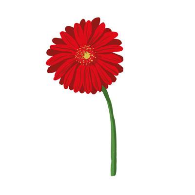 گل-قرمز
